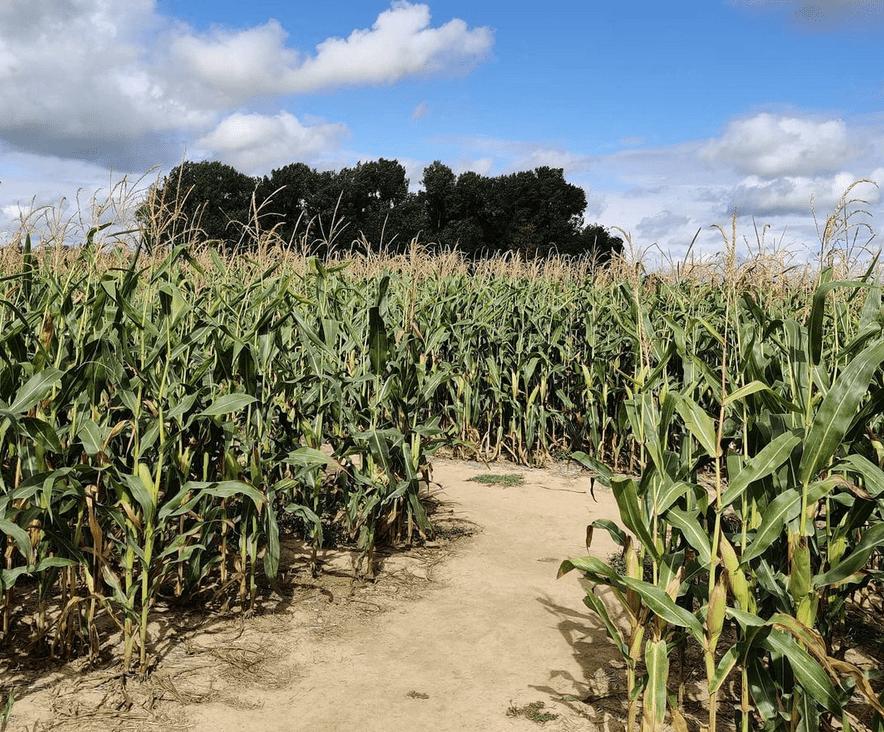 pop-corn-labyrinthe-val-deurope