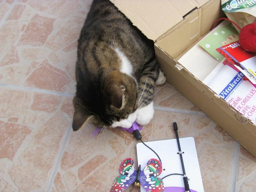 papillon kittybox