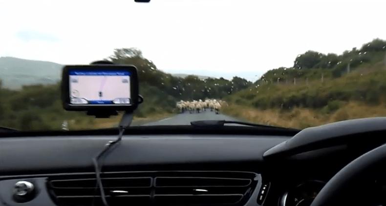 moutons-skye