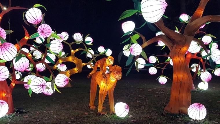 festival des lanternes gaillac singes