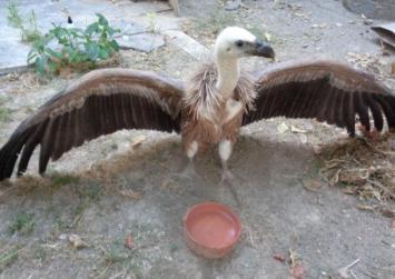 Περίθαλψη για το άγριο πτηνό που βρέθηκε στην Άρβη