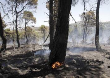 Βρέθηκε απανθρακωμένο πτώμα στην πυρκαγιά στην Εύβοια