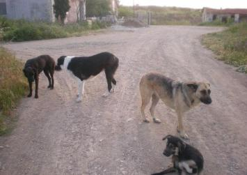 Αγέλη σκύλων στην Φανερωμένη επιτίθεται σε σταύλους