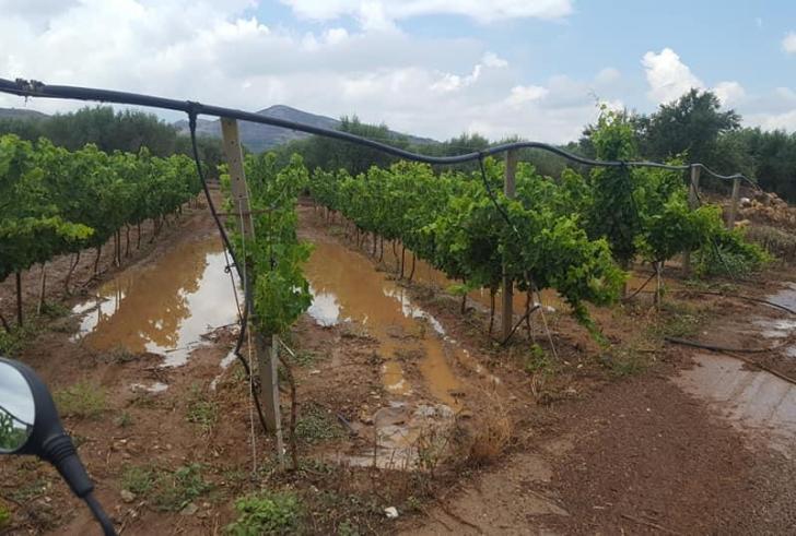 Άμεση αποζημίωση για τις ζημιές στις αγροτικές καλλιέργειες από τα έντονα καιρικά φαινόμενα στη Κρήτη