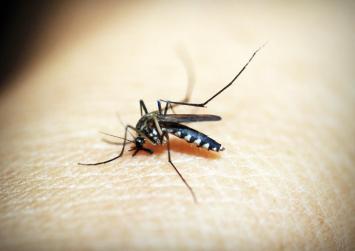 Νέο κρούσμα του ιού του Δυτικού Νείλου