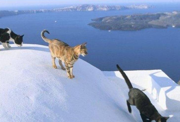 Δουλεία με γάτες στο Αιγαίο… από το περιοδικό Time