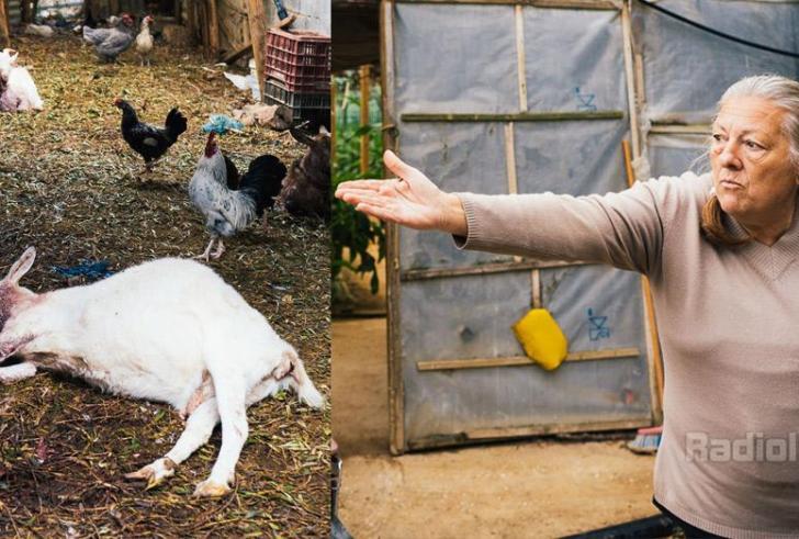 Εισβολή σκύλων σε κοτέτσι στην Ιεράπετρα – Έπνιξαν τα ζώα οικογένειας