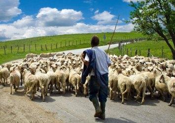 «Οι Ελληνοποιήσεις γάλακτος ρημάζουν τους κτηνοτρόφους»