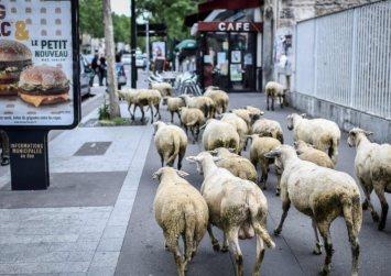 Στη Γαλλία έγραψαν σε σχολείο 15… πρόβατα για να μην καταργηθούν τμήματα!