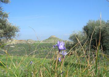 Στο «Ψηλό Καστέλι»: Ένας λόφος με ιστορία, μεταξύ Καπαριανών και Ρουφά (φώτο)