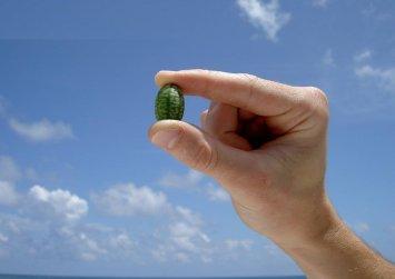 Τα πιο μικρά καρπούζια του κόσμου (φωτο)