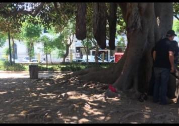 Χανιά: Παιδί εγκλωβίστηκε σε τεράστιο κορμό δέντρου