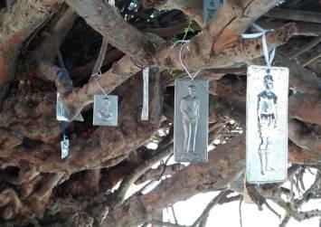 Τάματα μέσα στον κορμό της «Αγίας Μυρτιάς» της Παλιανής