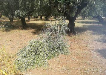 Κρήτη: Αποζημίωση για την απώλεια παραγωγής από τους ισχυρούς νοτιάδες