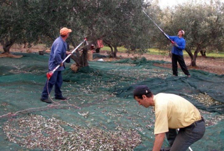 Κρήτη: Πρόστιμο 10.500 ευρώ σε αγρότη για απασχόληση παράνομου μετανάστη