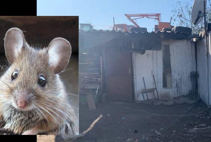 Έχασαν την επιμέλεια οι γονείς του βρέφους που νοσηλεύεται με δαγκωματιές ποντικών