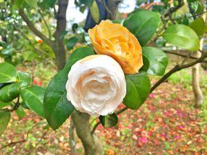 Flores brancas e amarelas