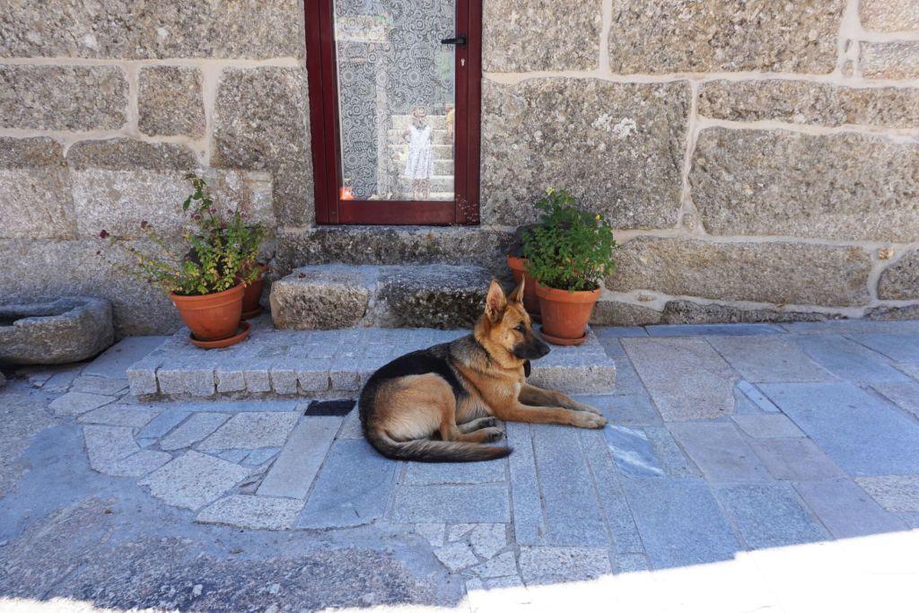 Quinta do Cobral guard dog