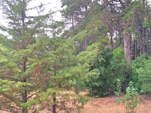 Parque de Monsanto - trees