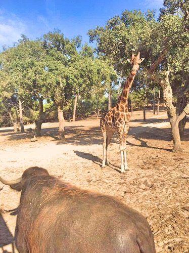 Animals at Badoca Safari Park