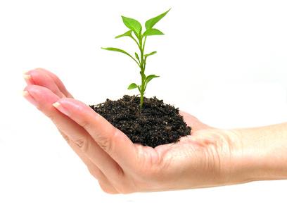 Hand mit Erde und Baum