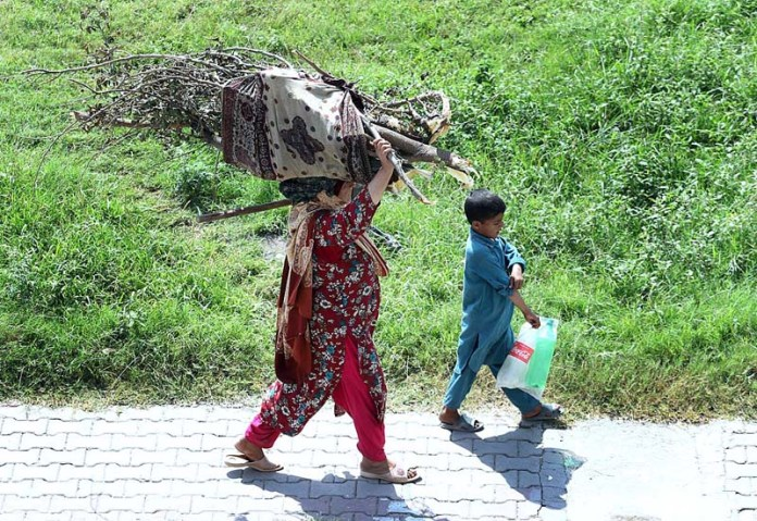 RAWALPINDI: September 16 - A woman on the way carrying a bundle of dry tree branches on her head at Rahimabad area to be used as fuel. APP photo by Abid Zia