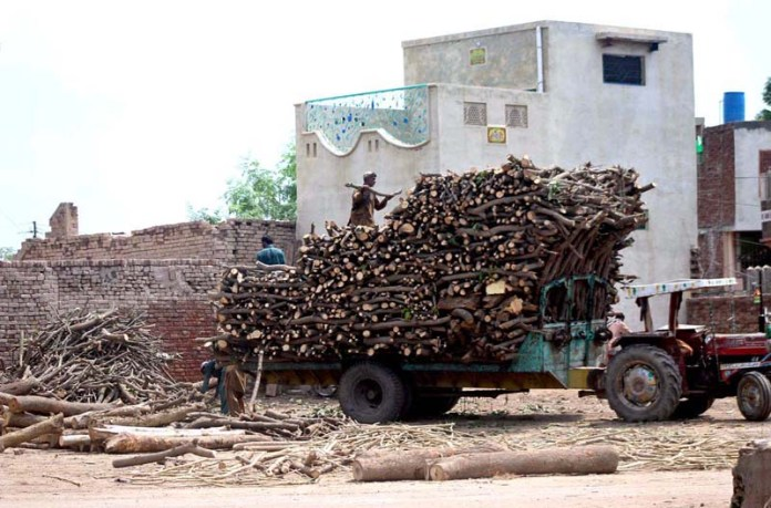MULTAN: September 06 - Labourers busy in loading wood on tractor trolley at Timber Market. APP photo by Tanveer Bukhari