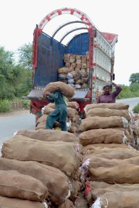 MULTAN: September 07 – Labourers busy in loading vegetable bags on delivery truck for supply to market. APP photo by Safdar Abbas
