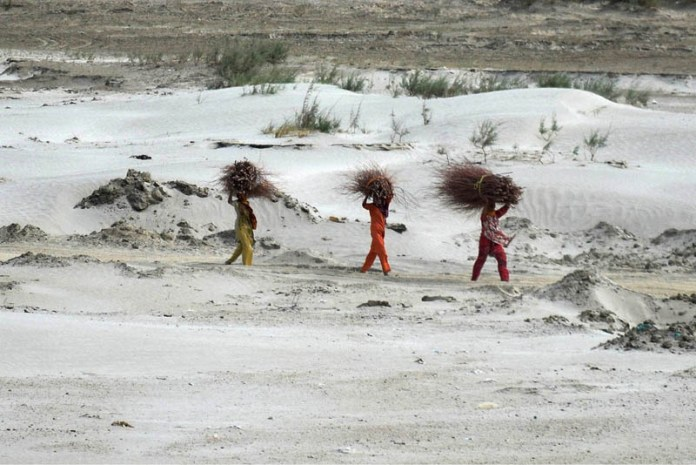 HYDERABAD: September 18 – Villager women on the way back after collecting dry tree branches for domestic use near Indus River. APP photo by Akram Ali