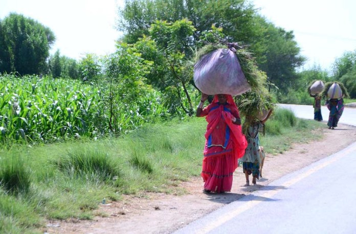 HYDERABAD: September 17 – Villager women on the way back while carrying bundle of fodder their head at Mirpurkhas Road. APP photo by Akram Ali