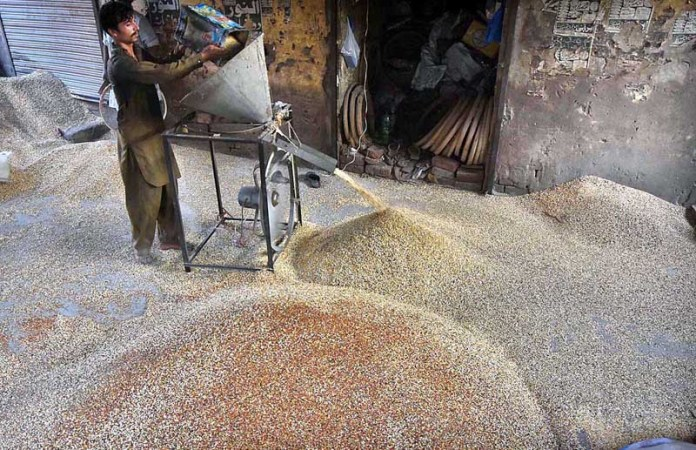 LAHORE: September 08 – A worker cleaning and crushing the corn seeds, wheat seeds and pearl millet seeds for using birds feeding at his workplace. APP Photo by Mustafa Lashari