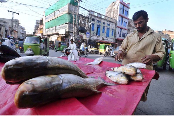 RAWALPINDI: September 12 – A street vendor displaying fishes to attract the customers. APP photo by Irfan Mahmood