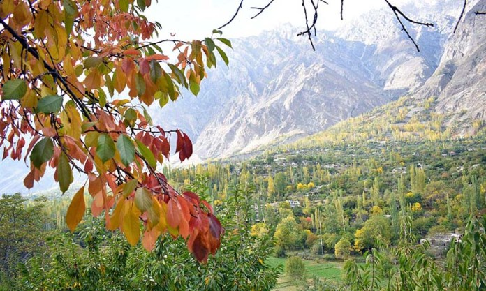 HUNZA: October 17 - An attractive and eye-catching view of tree leaf changing their colours to mark the autumn seasonal in the valley. APP Photo by Ashraf Hussain