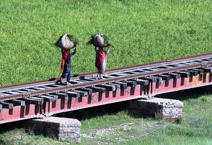 LARKANA: October 07 - Farmer women walking on the railway bridge while carrying bunch of rice crop. APP photo by Nadeem Akhtar