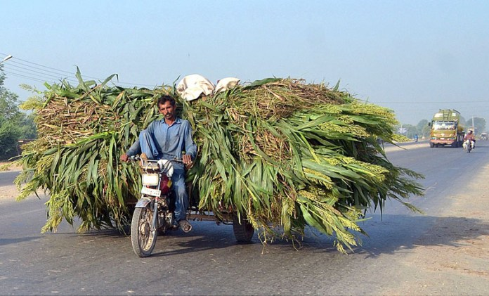 MULTAN: October 03 - A tricycle rickshaw holder on the way loaded with fodder for animals towards his destination. APP photo by Safdar Abbas