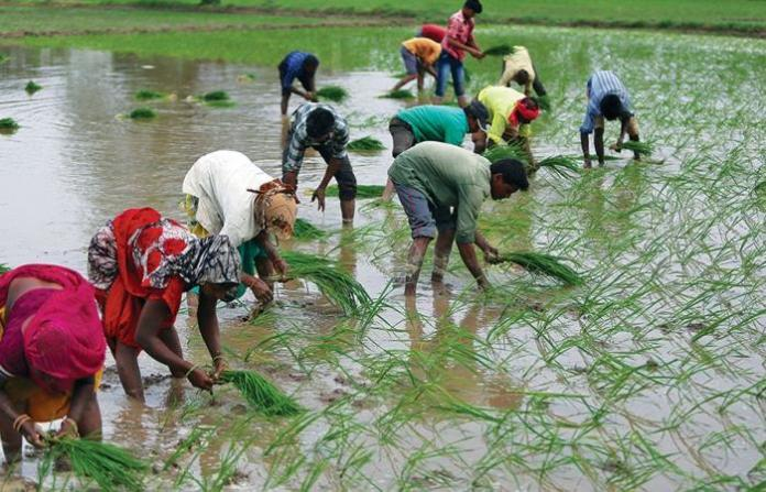 Rice traders organizes sessions on agri- children rights
