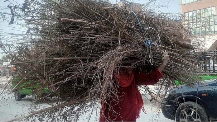 An elderly gypsy woman on the way back while carrying dried tree branches on her head to be used as fuel for cooking purposes