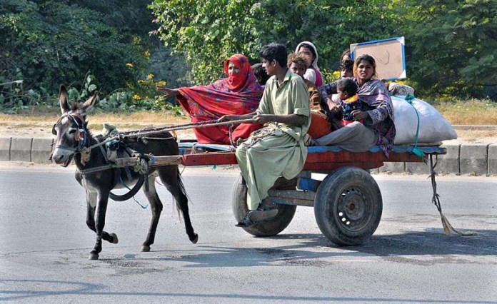 ISLAMABAD: November 09 – A gypsy family on the way on donkey cart in Federal Capital. APP photo by Saeed-ul-Mulk