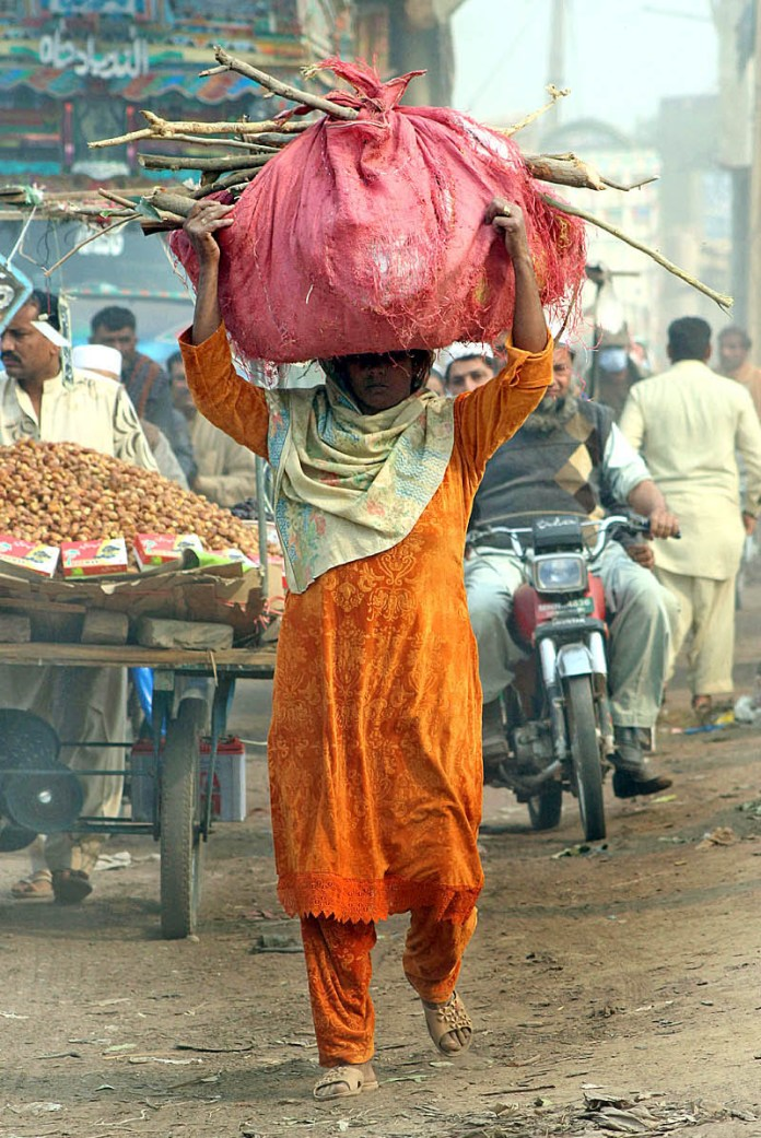 A female on the way while carrying heavy bundle of tree branches heading towards her destination