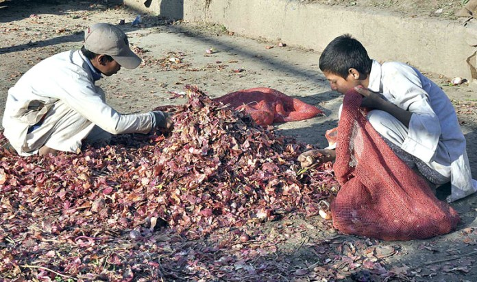 Gypsy youngsters collecting onions discarded with vendors at Fruit and Vegetable Market