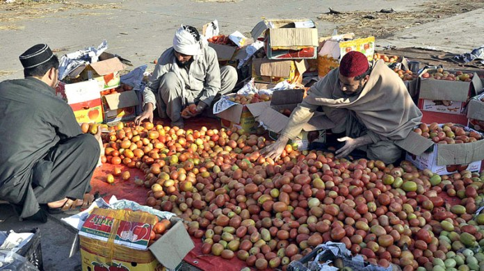 Workers sorting and packing tomatoes into boxes at Fruit and Vegetable Market