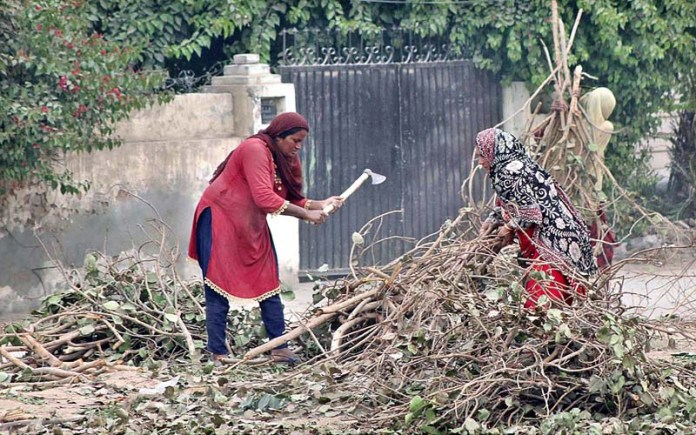 Gypsy women busy in chopping branches of tree to be used for fire