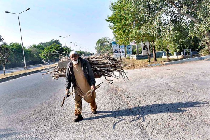 An elderly person on the way carrying dry branches of tree for domestic use in Federal Capital