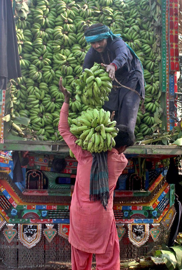 MULTAN: November 06 – Labourer busy in unloading Banana from delivery truck at fruit market. APP photo by Tanveer Bukhari