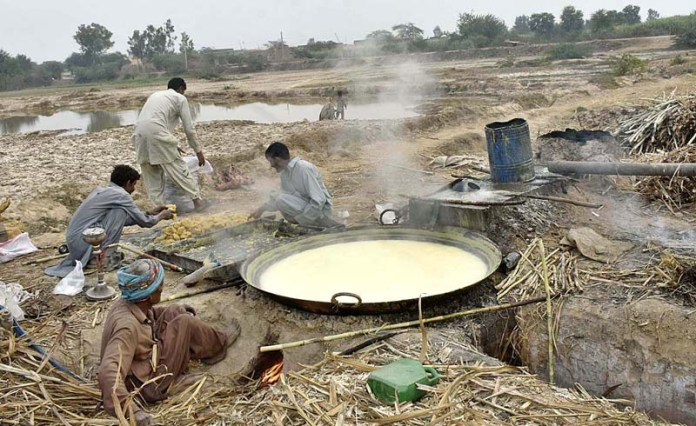 Farmers busy in making traditional sweet item 'Gurr'