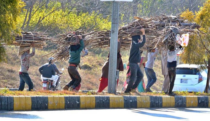 A group of children on the way carrying bundles of branches of tree on their head for domestic use in Federal Capital
