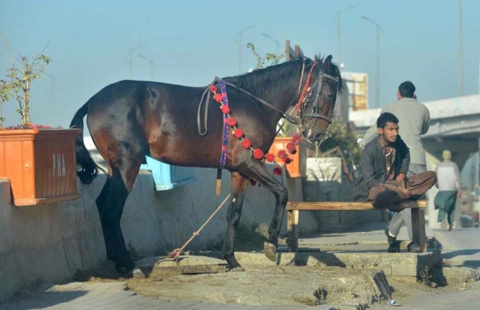 A vendor with his horse waiting for the customers along Murree Road
