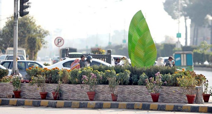 An attractive and eye-catching view of seasonal plants at Mall Road