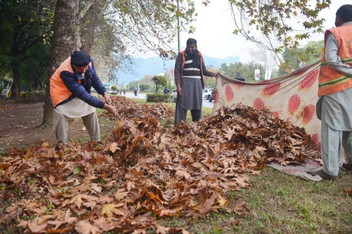 Workers collecting dry leaves near PTV HQ