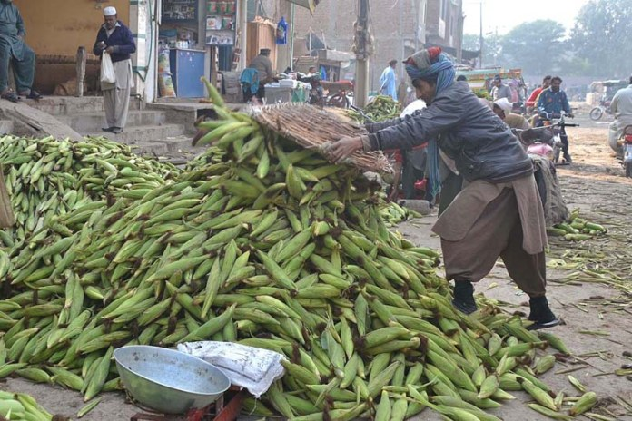 Vendor displaying corn cobs to attract the customers at vegetable market